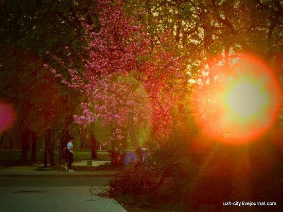 Blooming Spring in Uzhhorod, Ukraine, photo 22