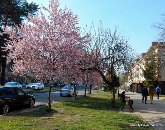 Blooming Spring in Uzhhorod, Ukraine, photo 23