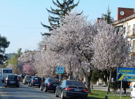 Blooming Spring in Uzhhorod, Ukraine, photo 24