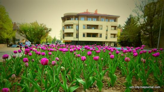 Blooming Spring in Uzhhorod, Ukraine, photo 4