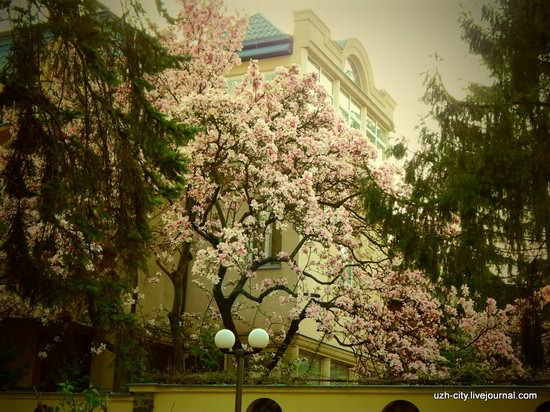 Blooming Spring in Uzhhorod, Ukraine, photo 5