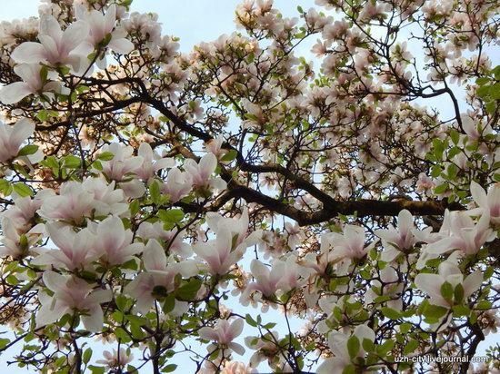 Blooming Spring in Uzhhorod, Ukraine, photo 6