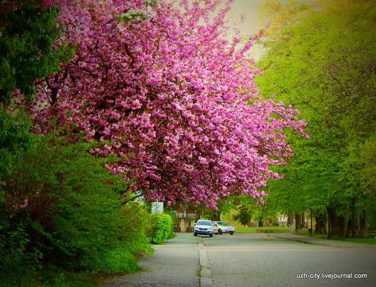Blooming Spring in Uzhhorod, Ukraine, photo 7