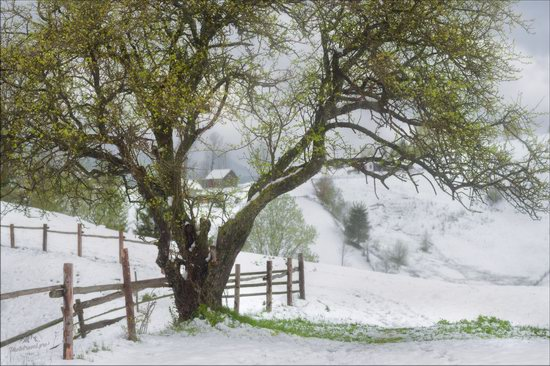 Unpredictable spring weather of the Carpathians, Ukraine, photo 7