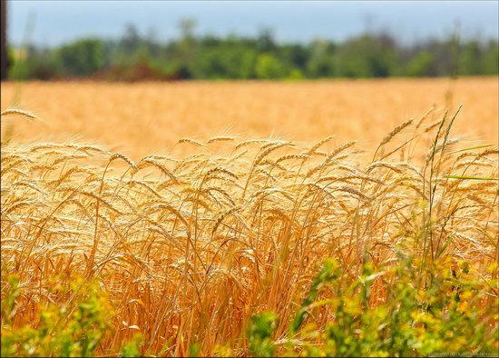 Wind Farm in Prymorsk in Southern Ukraine, photo 8