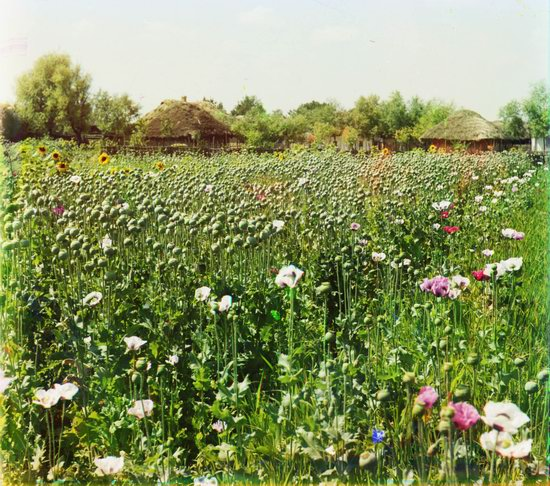 Color photographs of Ukraine in 1904-1905, photo 6