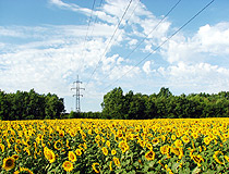 Lugansk region sunflowers