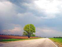 Road and a lonely tree in the Zaporizhia region